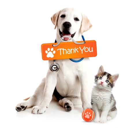gracias-dogcat.jpg